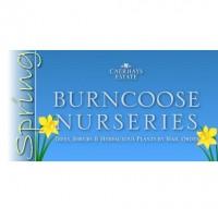 Burncoose Nurseries Online Www Co Uk