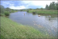 Sharpley springs Trout Fishery