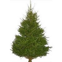 Santa's Own Prelighted Tree