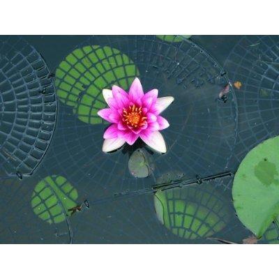 Netfloat Pond Netting
