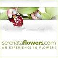 Serenata Flowers, www.serenataflowers.com