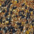 Economy Wild Bird Mixed Seeds