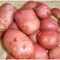 Potato - Sarpo Axona
