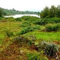 Bigland Trout Fishery, Cumbria