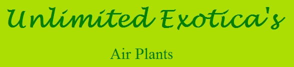 Unlimited Exotica's Air Plants - www.airplants.com.au