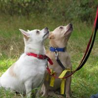 Adolescent Dogs Residential Dog Training & Classes Surrey - www.adolescentdogs.com