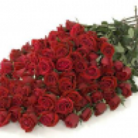 Toronto Rose Delivery - www.torontorosedelivery.com