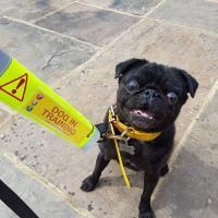 Adolescent Dogs Residential Dog Training & Classes Surrey - www.adolescentdogs.com