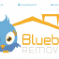 Bluebird Cargo LTD - www.bluebird-cargo.co.uk