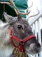 Thomas Cook Lapland to see Santa