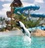 Orlando, Sea World Aquatica