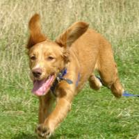 Adolescent Dog Training Reviews